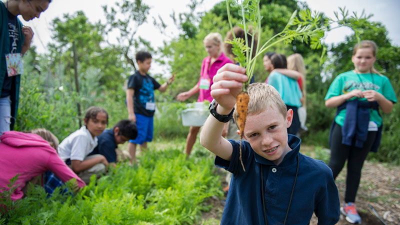 Boy holds carrot pulled from earth at Student Farm.
